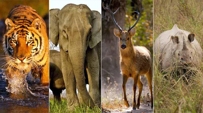 मानव–वन्यजुन्त द्वन्द्व न्यूनिकरणका लागि सक्दो पहल गर्ने सरकारको प्रतिवद्धता